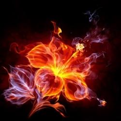 آلبوم شعله