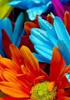 آلبوم گل